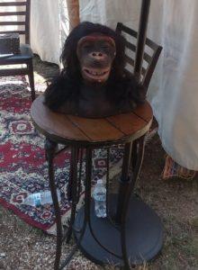 Photo of a strange looking monkey bust